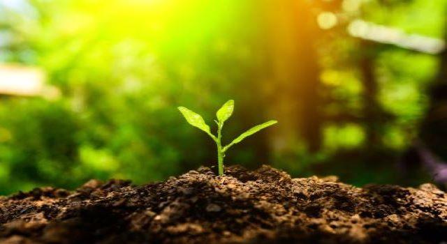 cuidem el medi ambient